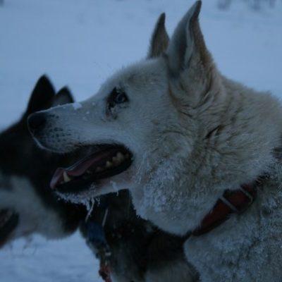 Seguros-para-perros, seguros-para-canicross, seguros-de-canicros, seguros-muxing, seguros-para-muxing, seguros-perros, seguros-para-mascotas, seguros-para-animales, seguros-mascotas, seguros-perros-peligrosos, seguros-para-perros-peligrosos, responsabilidad-civil-perros, seguros-responsabilidad-civil-para-perros, asegurar-mascotas, asegurar-perros, asegurar-canicros,