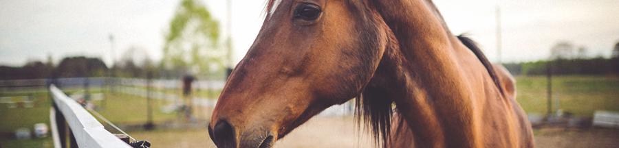 seguros-caballos, seguros-para-caballos, seguros-responsabilidad-civil-caballos, seguros-responsabilidad-civil-mulas, seguros-de-caballos, responsabilidad-civil-caballos, responsabilidad-civil-de-caballos, responsabilidad-civil-mulas, seguros-para-mulas, seguros-mulas, responsabilidad-civil-de-mulas, responsabilidad-civil-para-mulas, seguros-hipica, seguros-para-hipica, rc-hipica, responsabilidad-civil-hipica, responsabilidad-civil-para-caballos,