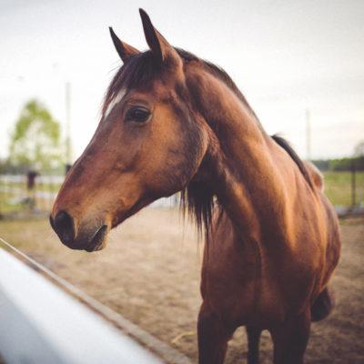 seguros-para-caballos, seguros-caballos, seguros-responsabilidad-civil-para-caballos, responsabilidad-civil-caballos, seguros-para-hipica, seguros-hipica, seguros-de-hipica, seguros-mulas, seguros-para-mulas,
